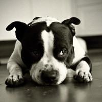foto Bully-