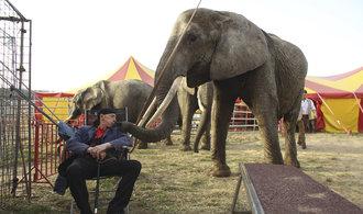 V cirkusech se o zvířata starají dobře, přesto bych podmínky pro chov zpřísnil, říká veterinář