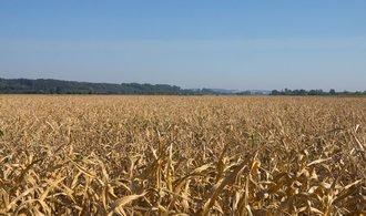 Až dvě miliardy za sucho. Ministerstvo zemědělství požaduje kompenzace kvůli nízké úrodě