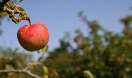 Ministerstvo chce od�kodnit ovocn��e za mrazy 133 miliony