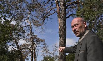 Lesy České republiky blokují přes čtvrt miliardy pro ostatní věřitele