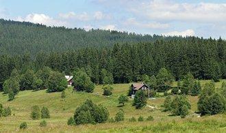 Toman: Lesy České republiky letos pošlou do státního rozpočtu dvě a půl miliardy