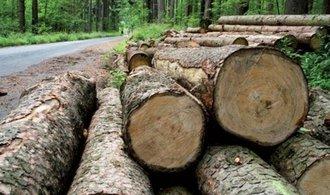 Lesy zvýšily těžbu dřeva, hrubý zisk meziročně vzrostl o osm procent na 3,3 miliardy