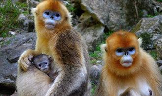 Pražská zoo těží z vlny návštěvníků, ještě nikdy jich nepřibývalo tak rychle