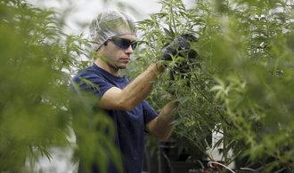 Marihuanové akcie svým extrémním zhodnocením zastiňují i loňskou kryptománii