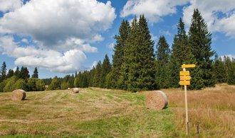 Lesům ČR klesl za první tři čtvrtletí hrubý zisk o víc než polovinu. Kvůli kůrovci a levnému dřevu