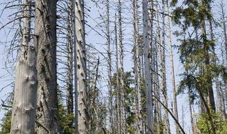 Akční plán proti kůrovci: ministerstvo chce zavést  nižší DPH na palivové dřevo