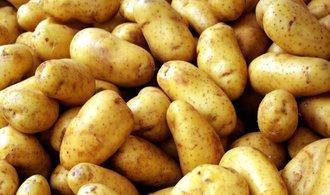 �roda brambor v �esku je velmi dobr�, dom�c� spot�ebu ale nepokryje