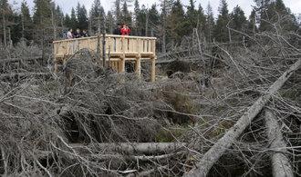Lesních kalamit bude více, může za to klimatická změna