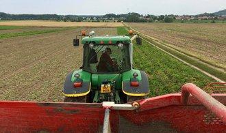 Zemědělci hlásí horší sklizeň, brambor je o pětinu méně. Dařilo se jen řepce