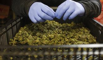 Peru zlegalizovalo marihuanu pro lékařské účely