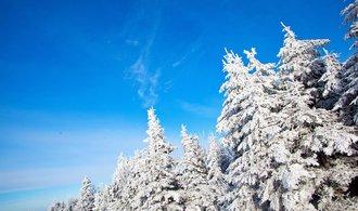 Lesy České republiky jsou v zelených číslech. Státnímu podniku vzrostl hrubý zisk