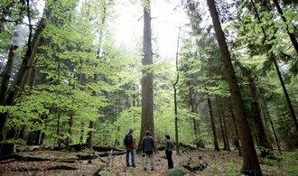 NP Šumava navrhuje nové členění. Bezzásahové zóny mají zůstat na 27 procentech parku