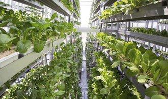 Budoucnost zemědělství: Philips staví vertikální farmu pro obchodní řetězce