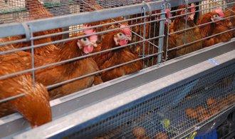 Lidl se připojí k Tesku. Do sedmi let úplně zruší prodej vajec z klecových chovů