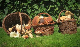 Češi si z lesů odnesli houby za téměř pět miliard, nasbírali jich o tisíce tun více