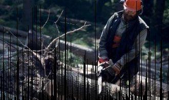Zpracovatelé dřeva dostanou desítky milionů na osvětu
