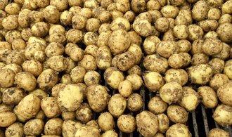 Kapková závlaha může zajistit až třikrát větší úrodu brambor, zjistili čeští vědci