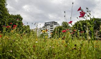 Města začínají zakládat městské louky. Pomohou například se suchem