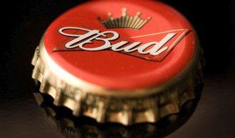 Pivařům se mění chutě. Světové pivovary to zkoušejí s konopím