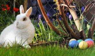 Velikonoční králíčci do útulku nepatří
