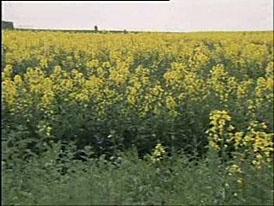 Bursík: biopaliva se budou přidávat od roku 2008