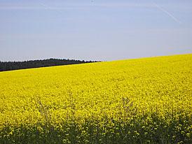 Biopaliva do nafty? Možná už od září