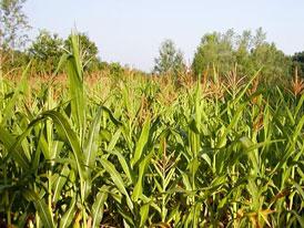 EU: Biopaliva způsobují větší škody, než jsme čekali