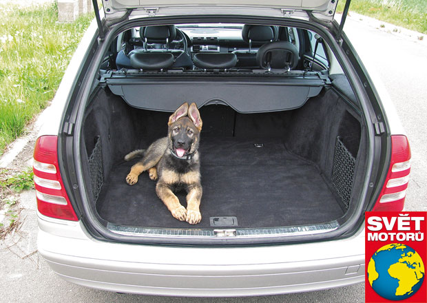 Šest způsobů, jak převážet psa v autě