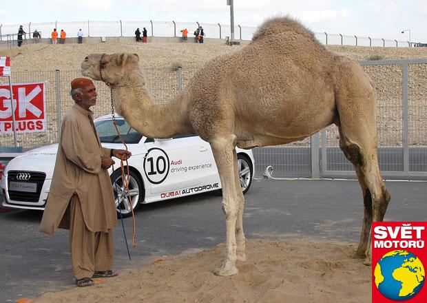 Jak se jezdí ve Spojených arabských emirátech: Řidičův rajský svět