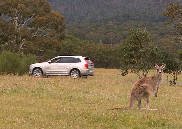 Video: Volvo testuje XC90 s funkcí detekce klokanů