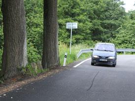 Potřebujeme nebezpečné stromy u silnic? I za cenu života?