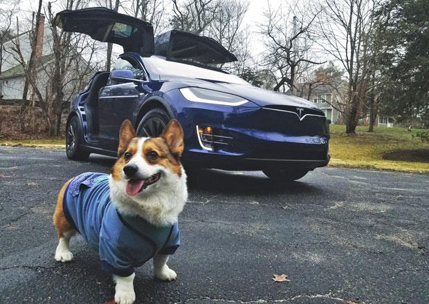 Tesla vyslyšela prosby zákazníků a vozy dostanou nové funkce. Jedna je určena pejskům