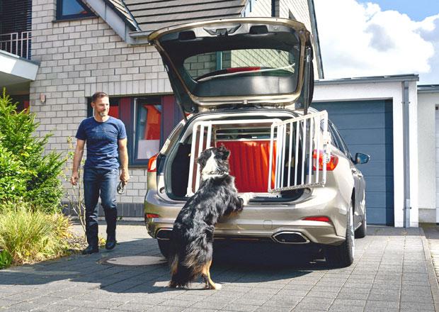 Každý třetí pes jezdí v autě na volno. Je to nebezpečnější, než si myslíte