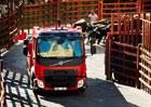 Volvo FL v honičce s býky v ulicích Ciudad Rodrigo (2x video)