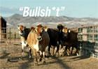 Video: Toyota Mirai jezdí na... kravince