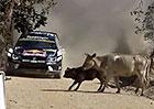 Podívejte se na nejbláznivější momenty letošní sezony motorsportu!