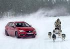 Seat Leon Cupra ST 300 si zazávodil na sněhu se psím spřežením
